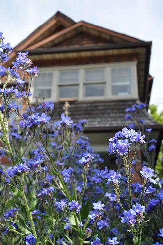 Urban Gardens: Florist Sarah Nixon Grows Her Flowers in the Neighbors' Yards