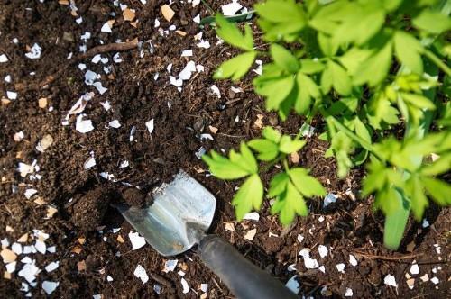 The Garden Decoder: Should You Get a 'Soil Test'?