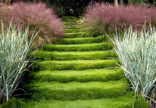 Gardening 101: Zoysia Grass