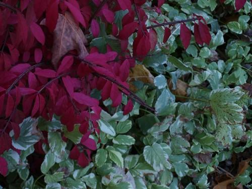 Native Plants: 10 Alternatives to Invasive Garden Invaders