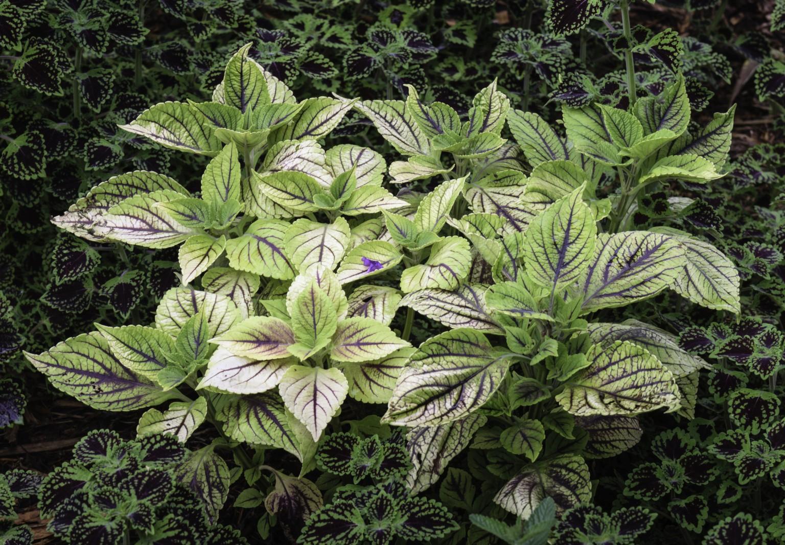 Gardenism & Landscape - cover