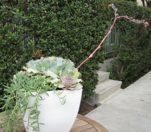 DIY Outdoor Planter: Tough Beauties That Won't Die, Even If You Forget to Water