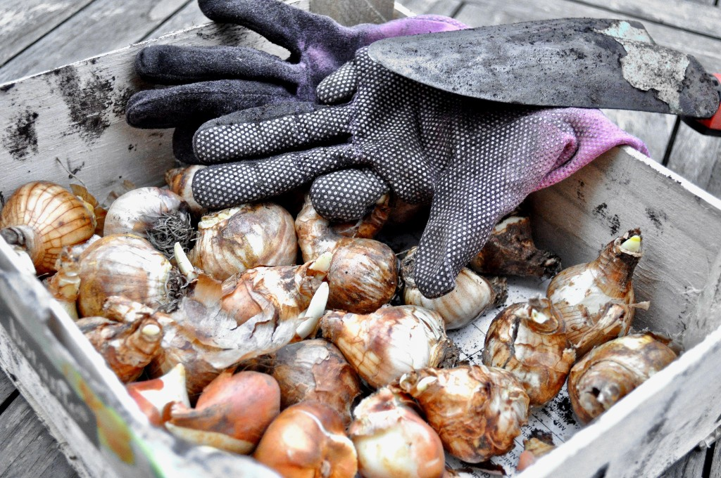 Your First Garden: What You Need to Know Before You Plant Bulbs