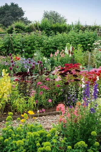 Required Reading: The Cut Flower Patch
