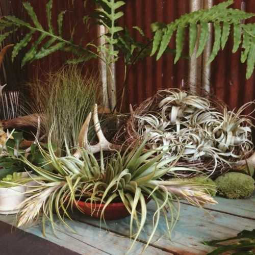 Ask the Expert: Tips for Starting a Houseplant Collection