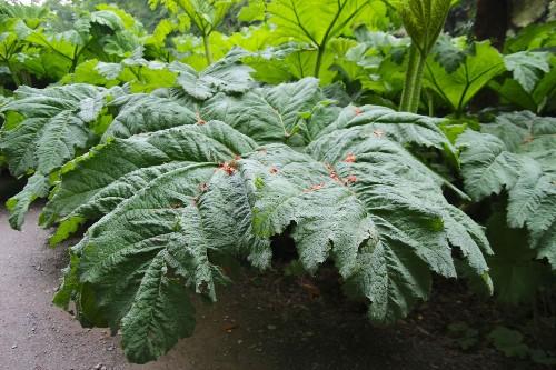 10 Garden Ideas to Steal from Ireland