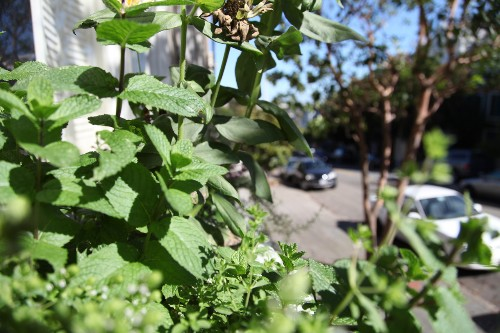 The Novice Gardener: Is It Safe to Grow Food in Urban Soil?