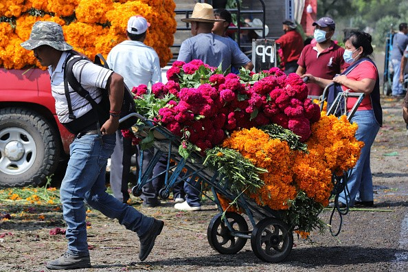 Salesman transports cempasuchil flowers ahead of Day of the Dead...