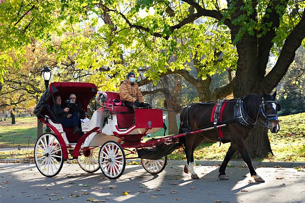 A tour guide wearing a protective mask drives a horse-drawn carriage...