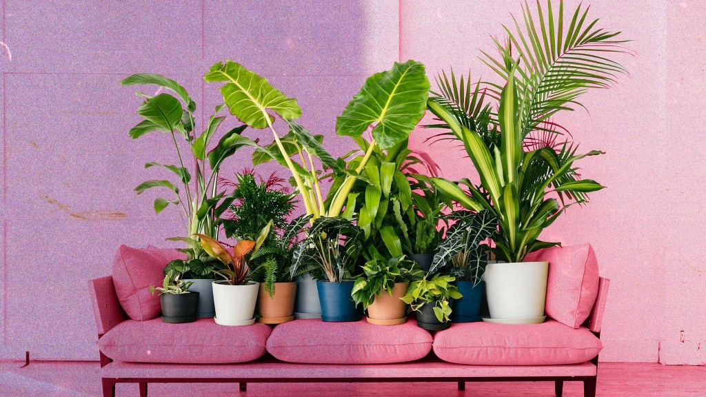 8 Things First-Time Plant Owners Should Know, According to Plant Whisperers
