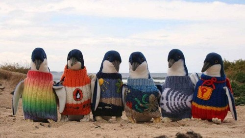 Cute of the day: These penguins need you to knit them little sweaters!