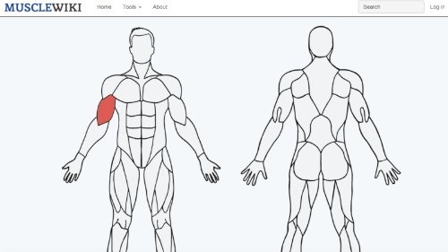 This Cool Website Tells You Exactly How to Work Any Muscle
