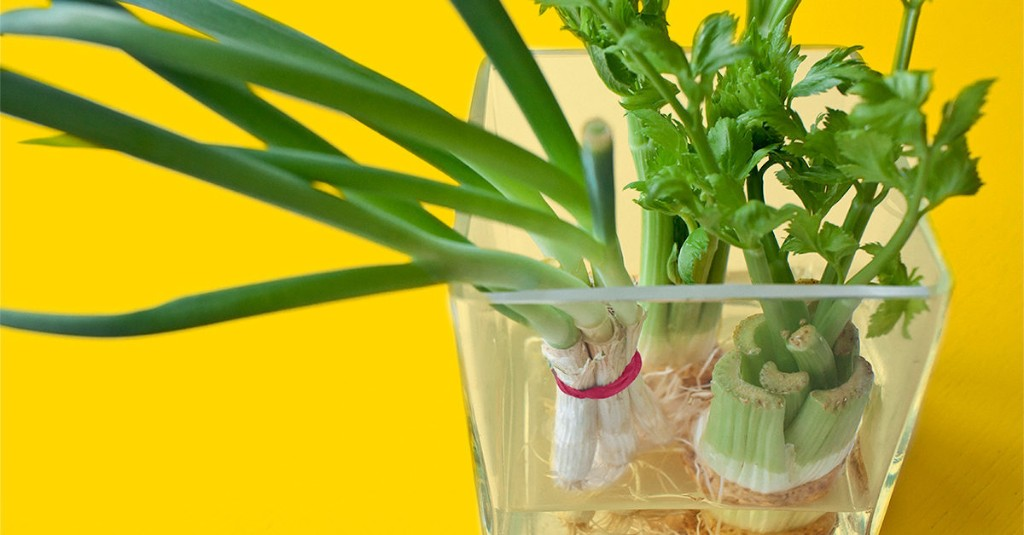 11 Indoor Vegetables and Herbs You Can Regrow Without Soil