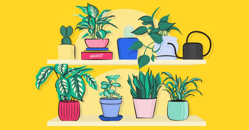 21 Types of Indoor Plants for Ultimate Plant Parenting