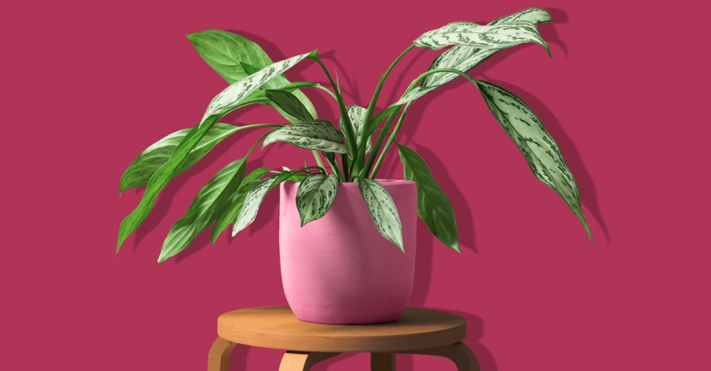 Low-Light Indoor Plants: 25 That Make the Cut