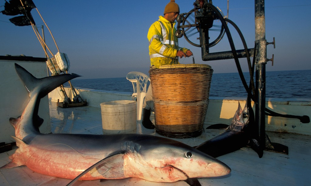 Seafood fraud: why your Mediterranean swordfish might actually be shark