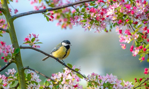 Birds, buds and bright days: how spring can make us healthier and happier