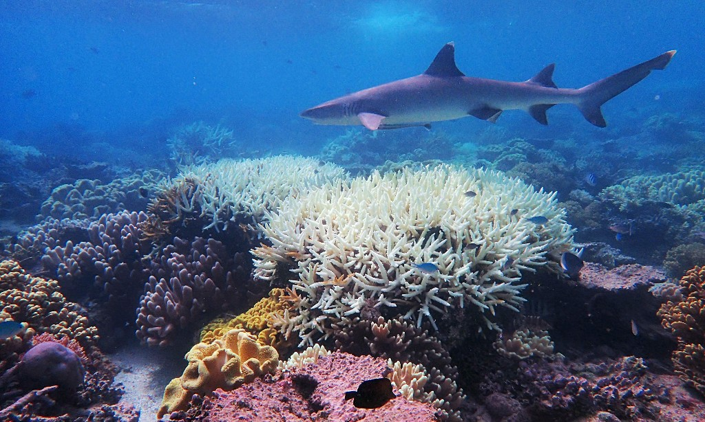 World fails to meet a single target to stop destruction of nature – UN report