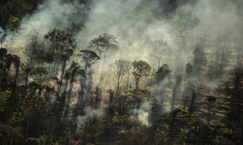 Tesco urged to ditch meat company over alleged links to Amazon deforestation