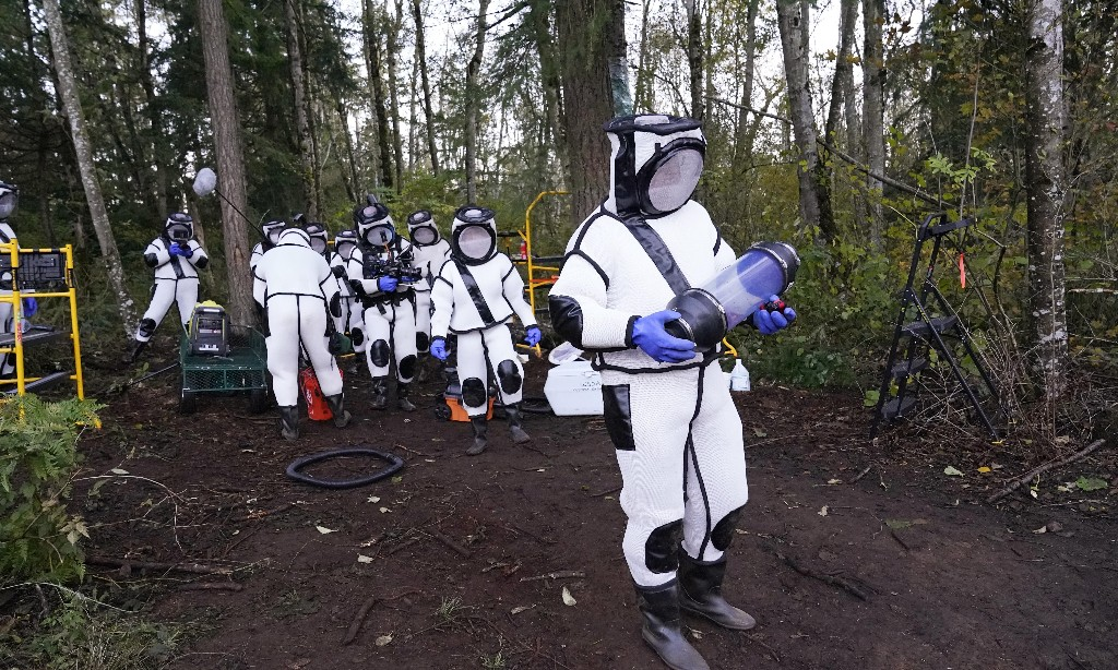 Washington state crews destroy first US murder hornet nest