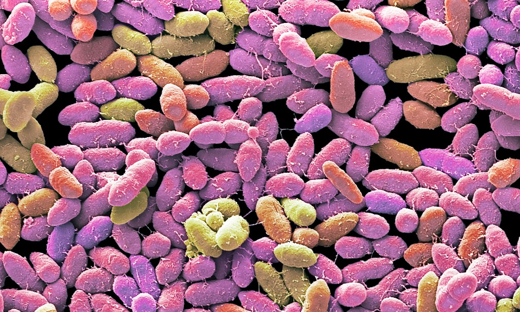 The poo panacea: inside the strange, surprising world of faecal transplants