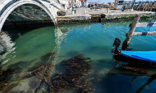 'Nature is taking back Venice': wildlife returns to tourist-free city