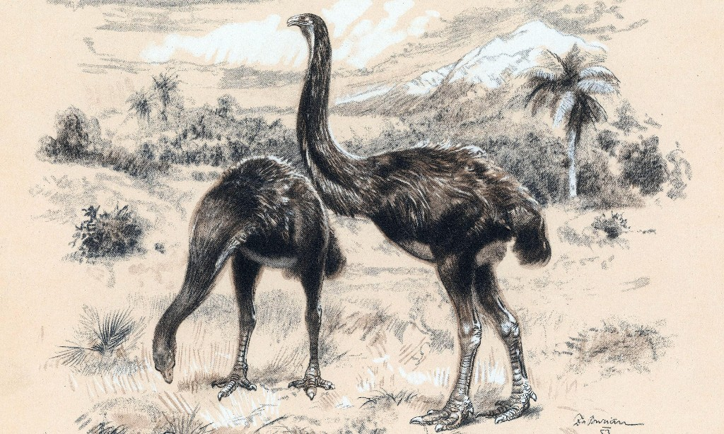 New Zealand unveils plans to tackle trade in bones of extinct moa birds