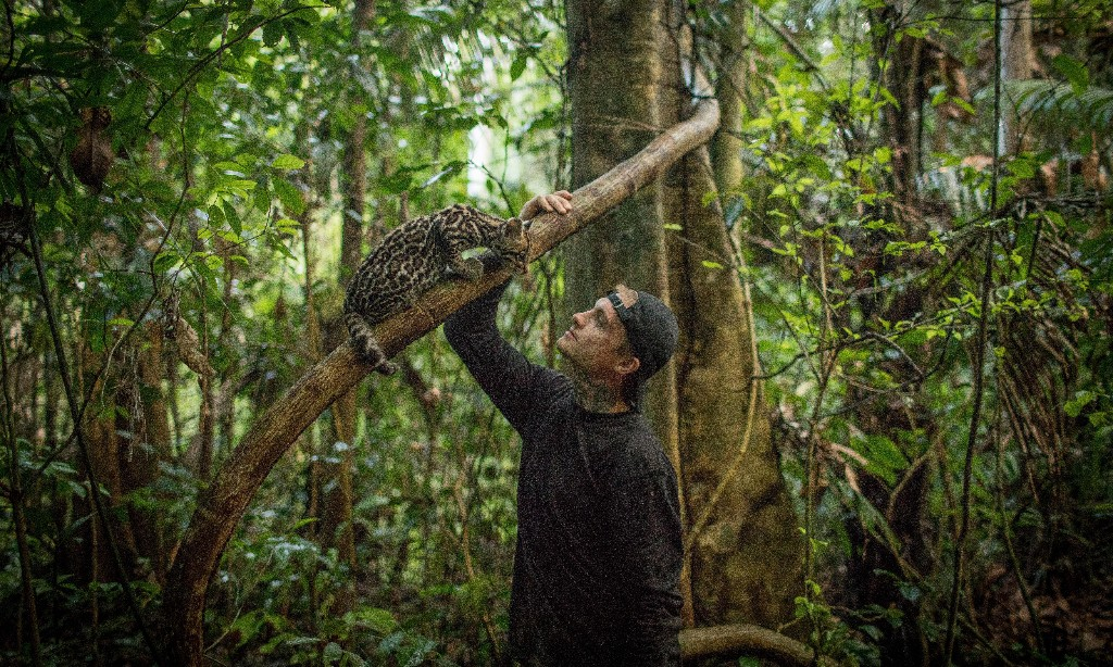 Experience: I raised an ocelot in the jungle
