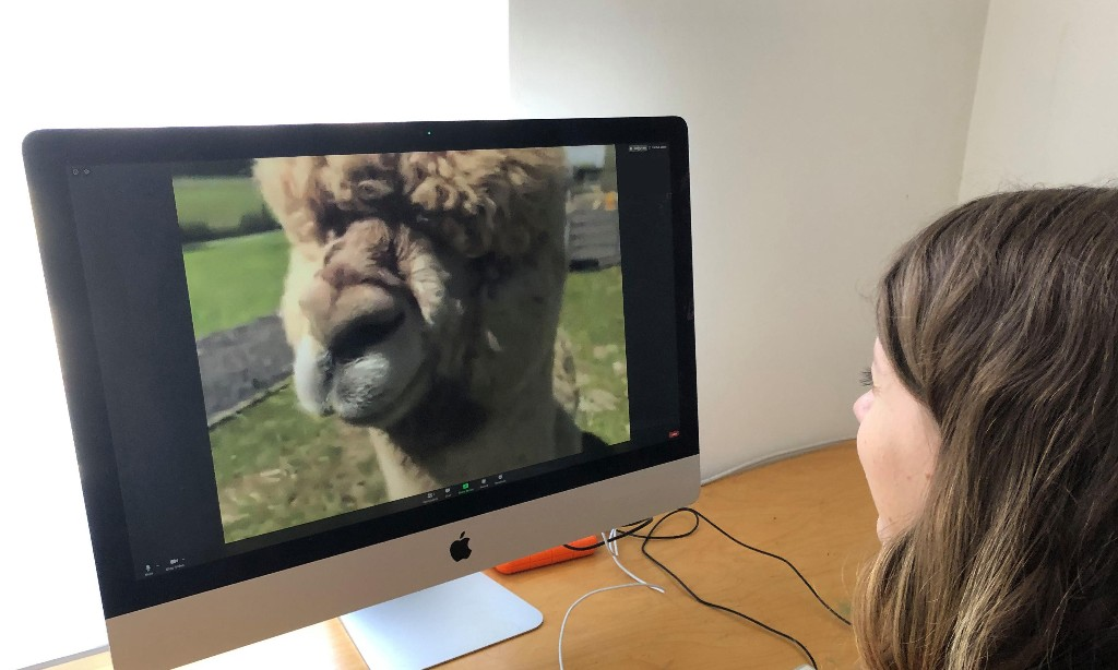 'It started as a joke': the animal Zoom calls delighting a locked-down public