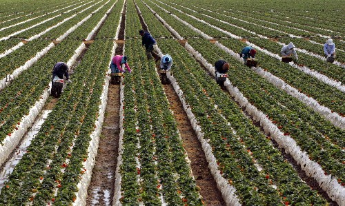 California's farm workers pick America's essential produce – unprotected from coronavirus
