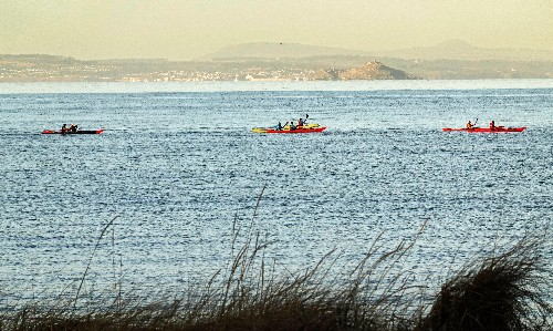 Call for drone users and jetskiers to keep away from marine wildlife
