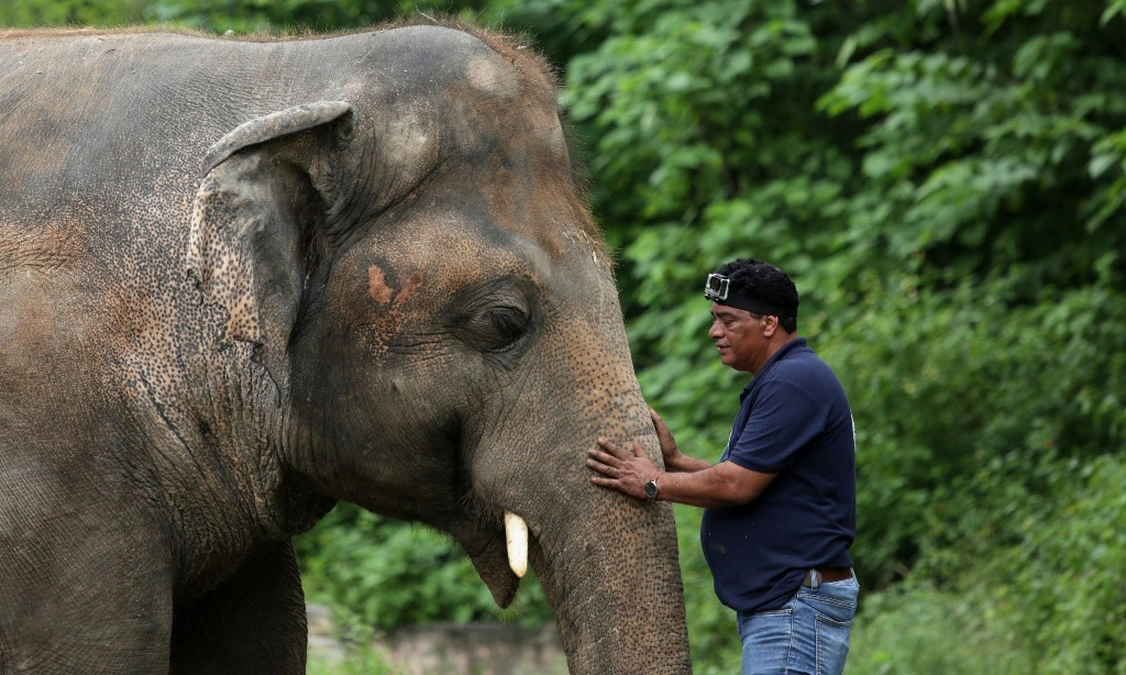 'World's loneliest elephant' allowed to leave zoo for better life