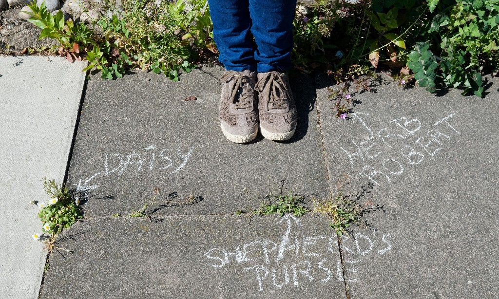 'Not just weeds': how rebel botanists are using graffiti to name forgotten flora