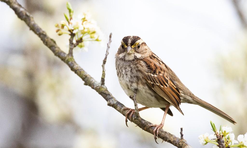 Alarm as pesticides spur rapid decline of US bird species