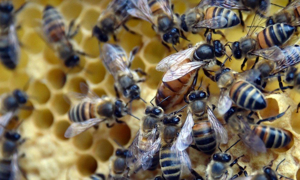 Brussels failing to protect bees, says watchdog