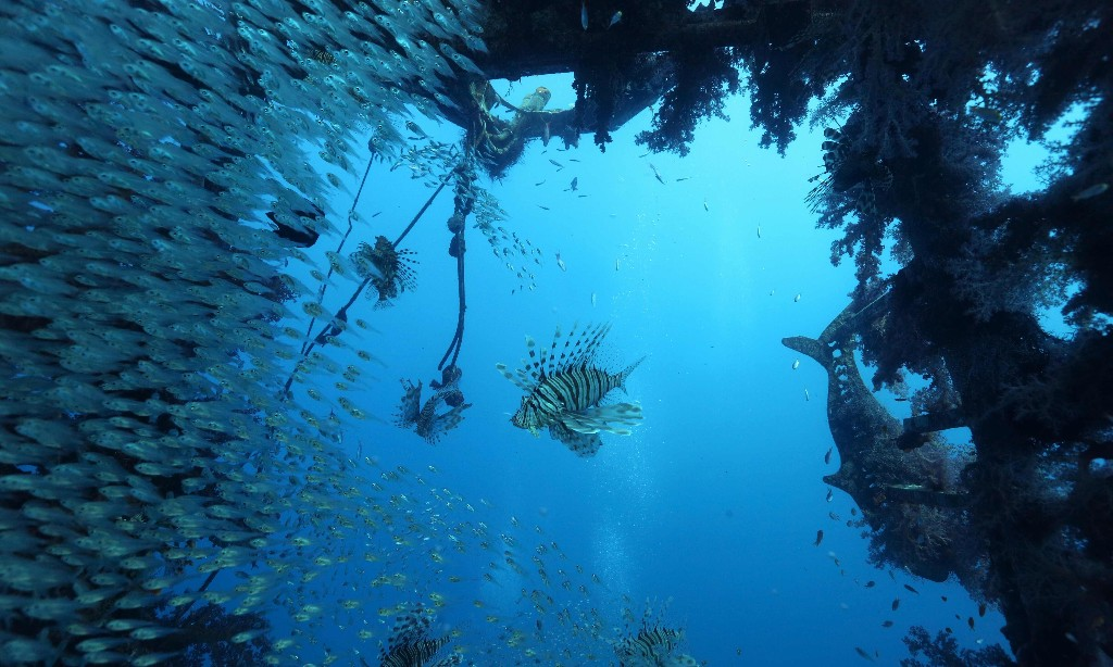 Israel fish deaths linked to rapid warming of seas
