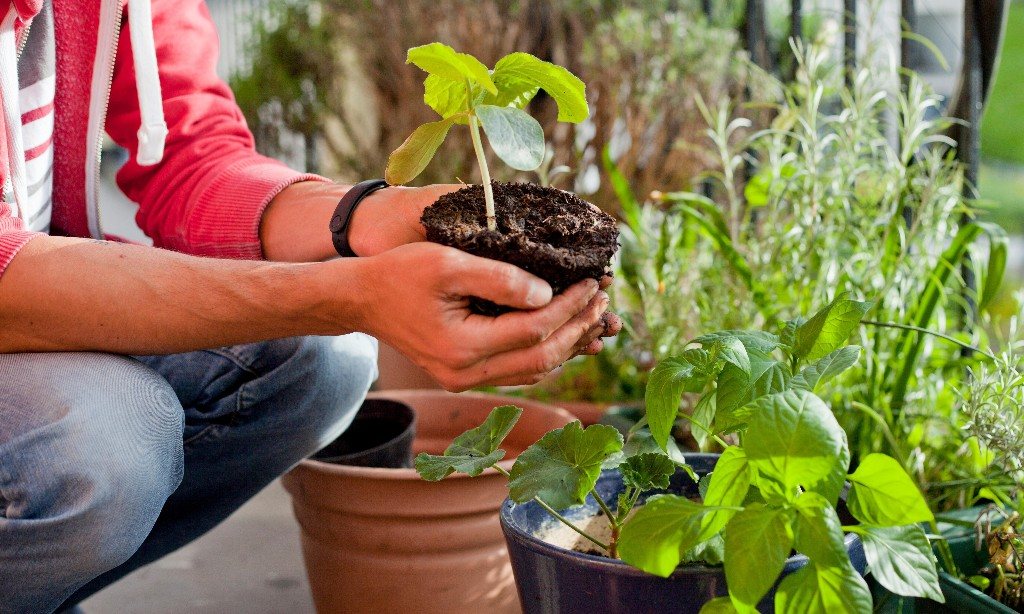 Go to ground amid coronavirus: how to grow a living pantry to eat this winter