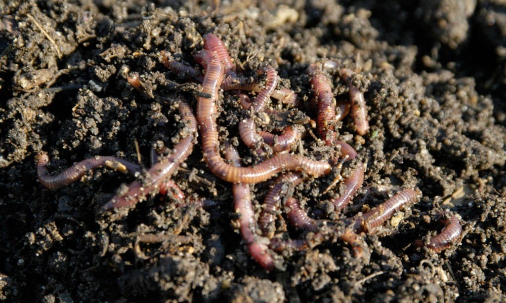 Melbourne academics win Ig Nobel prize for research showing worms vibrate like water