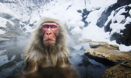 Animals out in the cold - in pictures