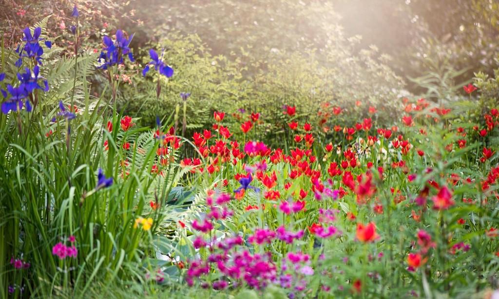 The joys of spring! 10 easy October tasks to make your garden gorgeous next year