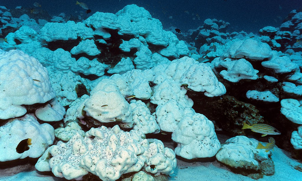 Great Barrier Reef on brink of third major coral bleaching in five years, scientists warn