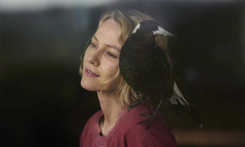 Penguin Bloom review – Naomi Watts saved by a magpie in charming drama