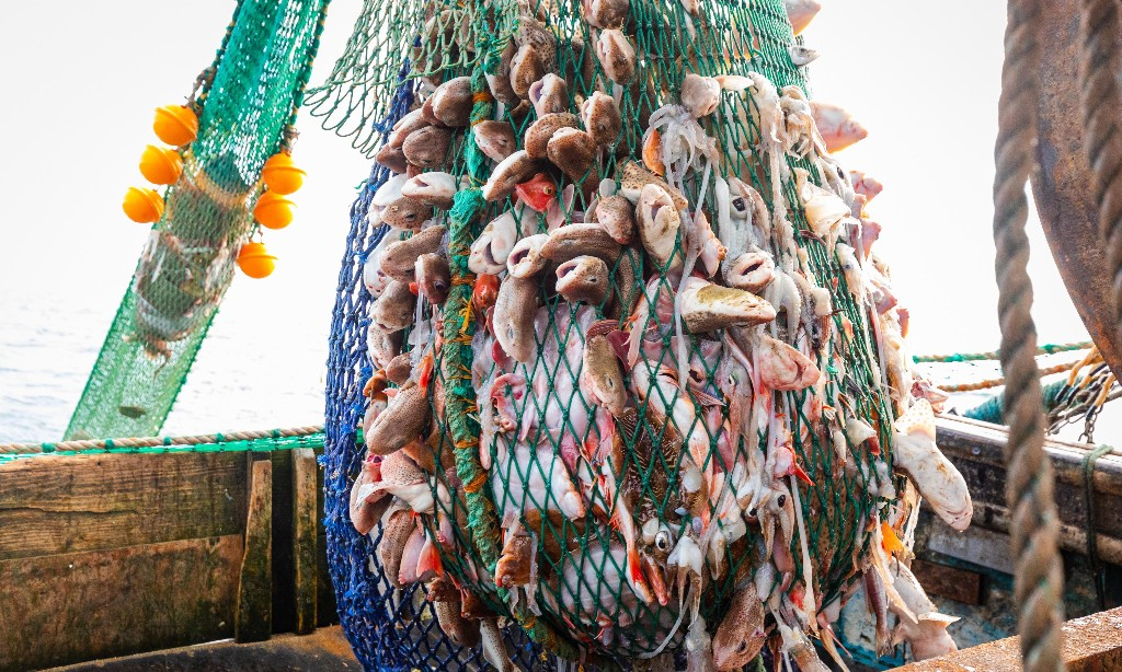Brexit fishing gamble suggests No 10 forgot its economics homework