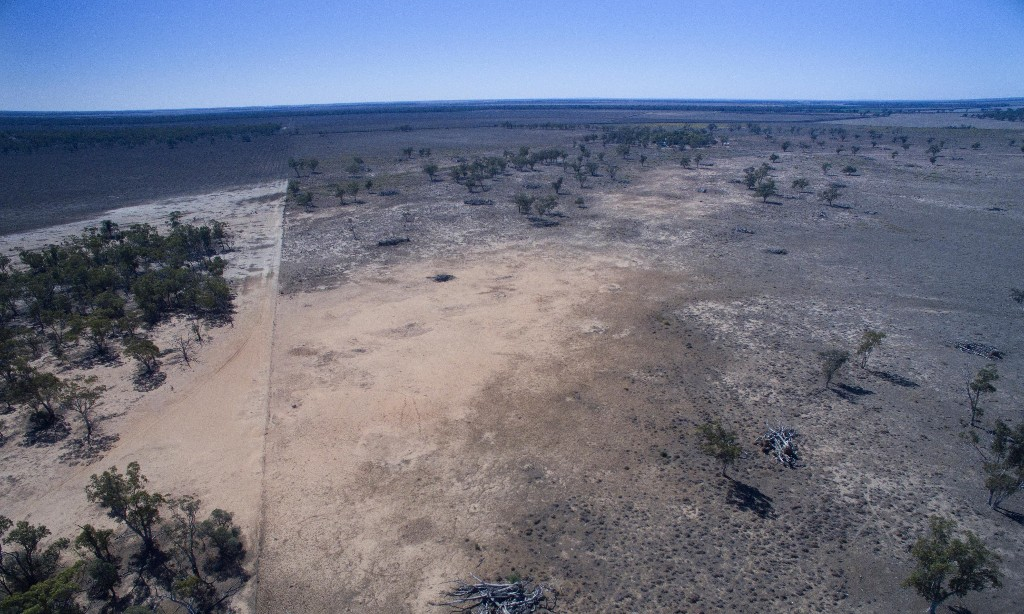 Land-clearing in NSW rises nearly 60% since laws were relaxed