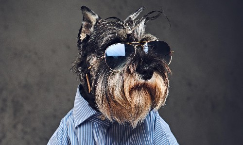 From designer dogs to face masks: this week's fashion trends