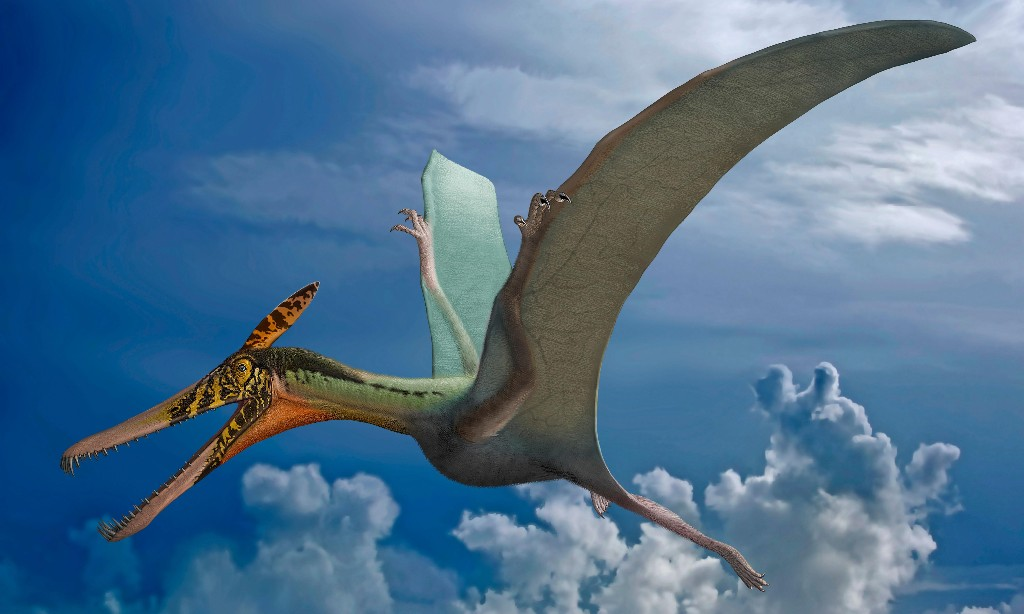 First winged reptiles were clumsy flyers, research suggests