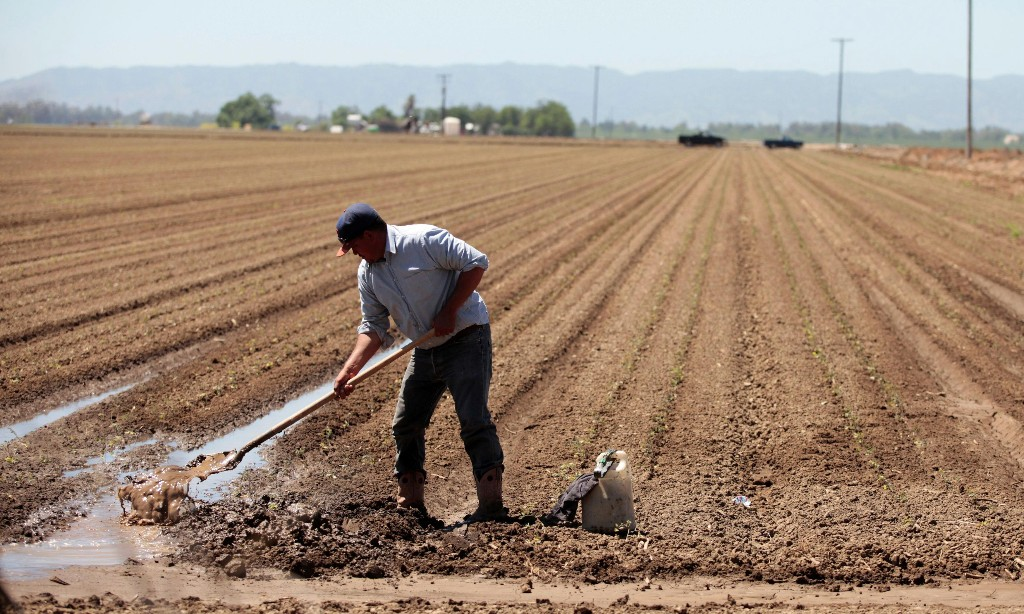 'Everyone tested positive': Covid devastates agriculture workers in California's heartland