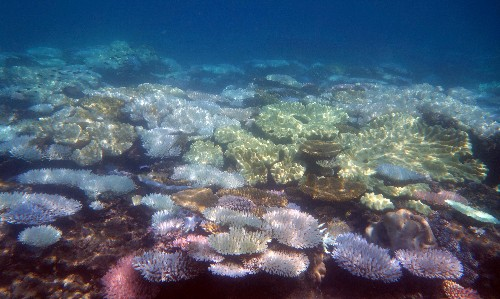 Great Barrier Reef's latest bleaching confirmed by marine park authority