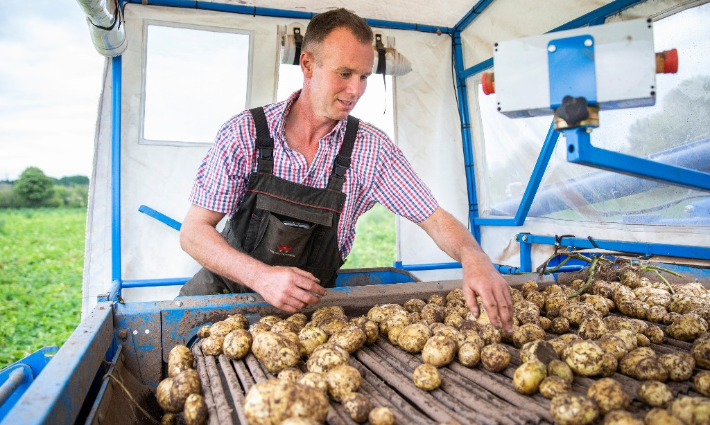 UK potato farmers fear another washout for this year's crop