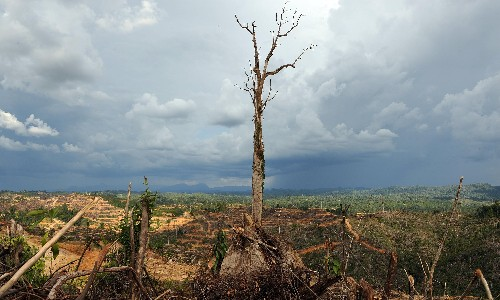 Coronavirus: 'Nature is sending us a message', says UN environment chief